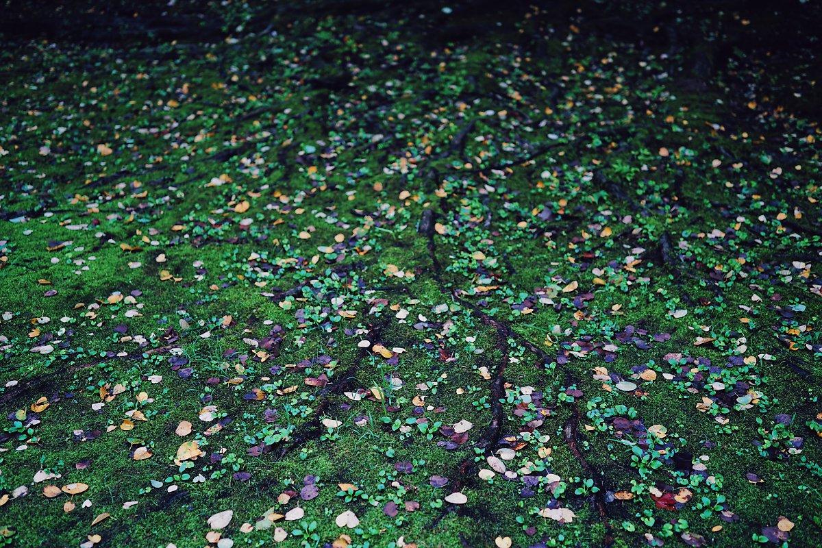 넓게 펼쳐진 비맞은 낙엽