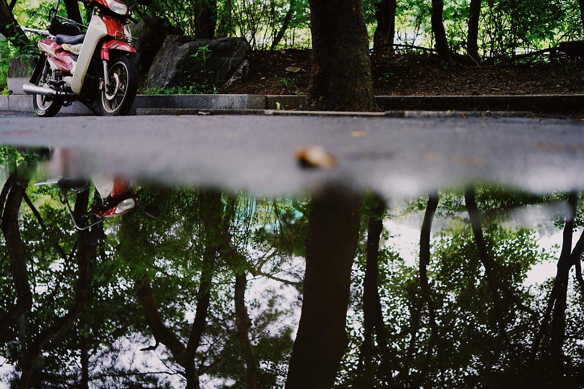 세워둔 오토바이와 고인 물에 비친 나무