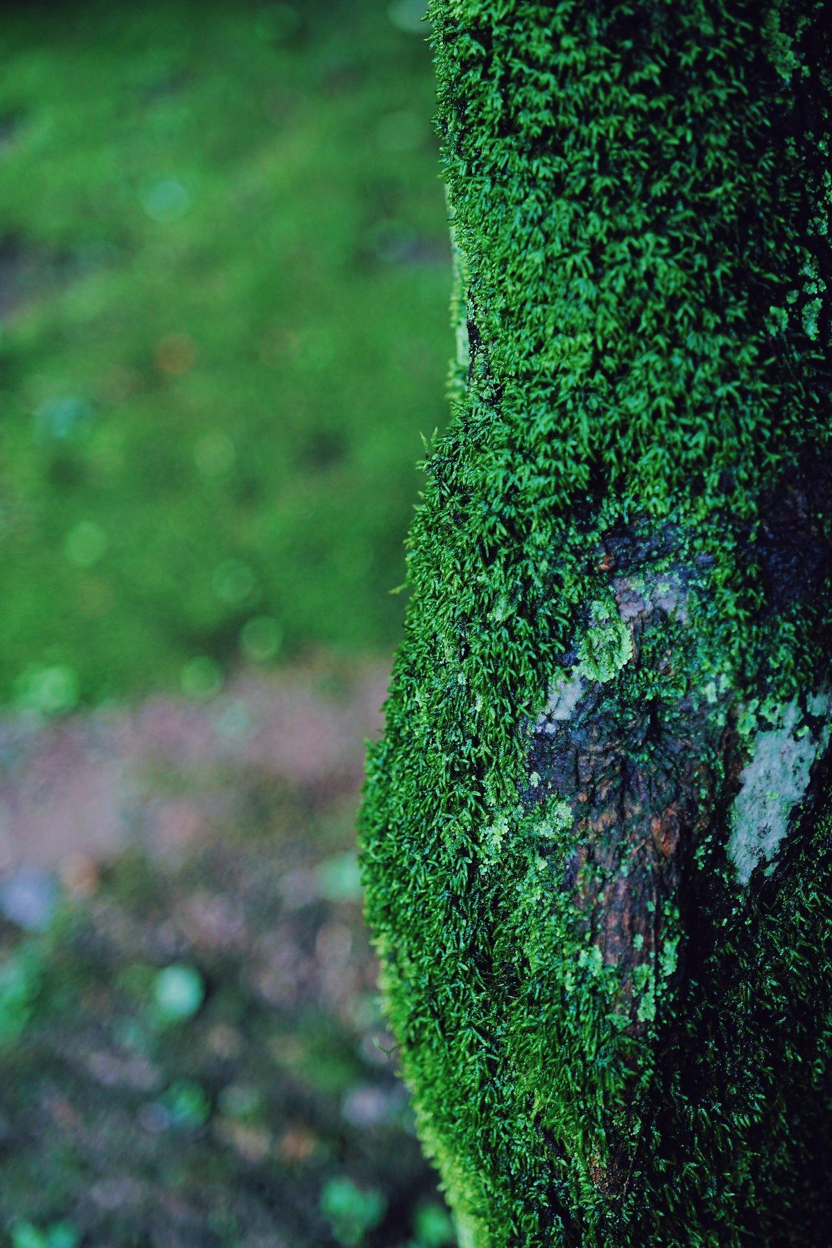 이끼 낀 나무 접사