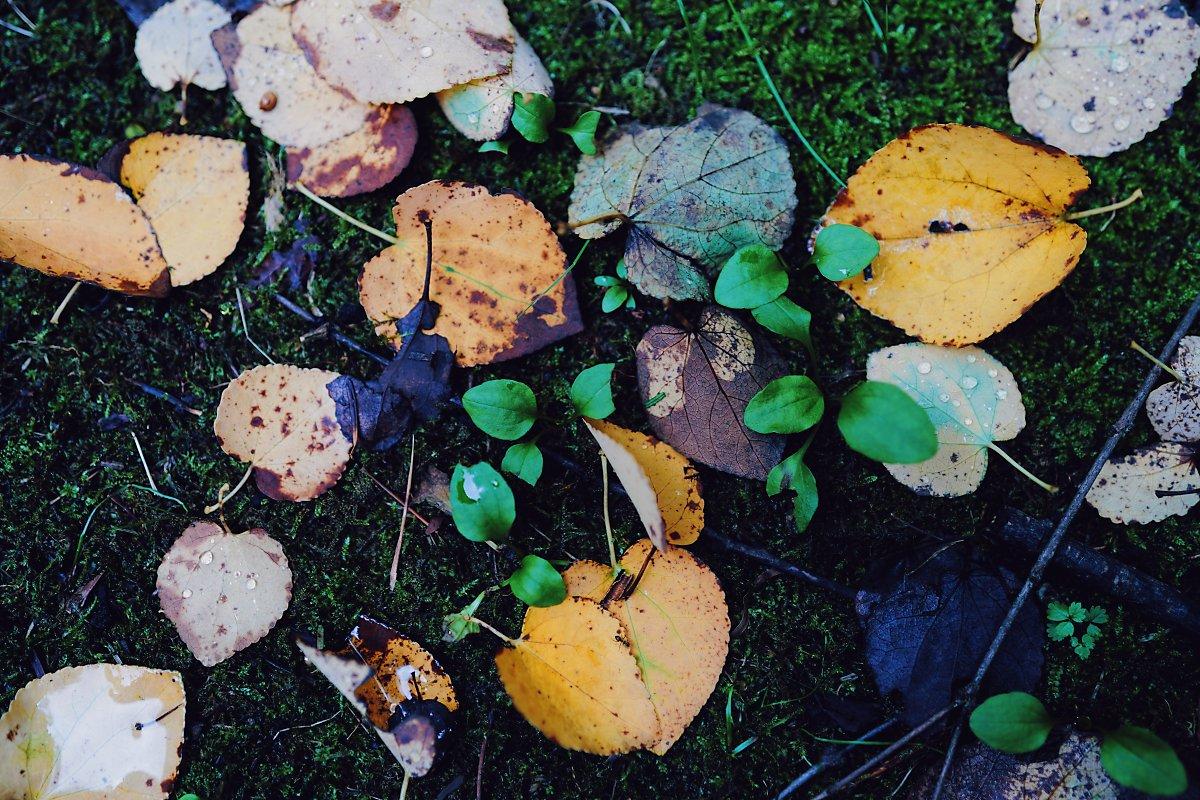 낙엽 접사