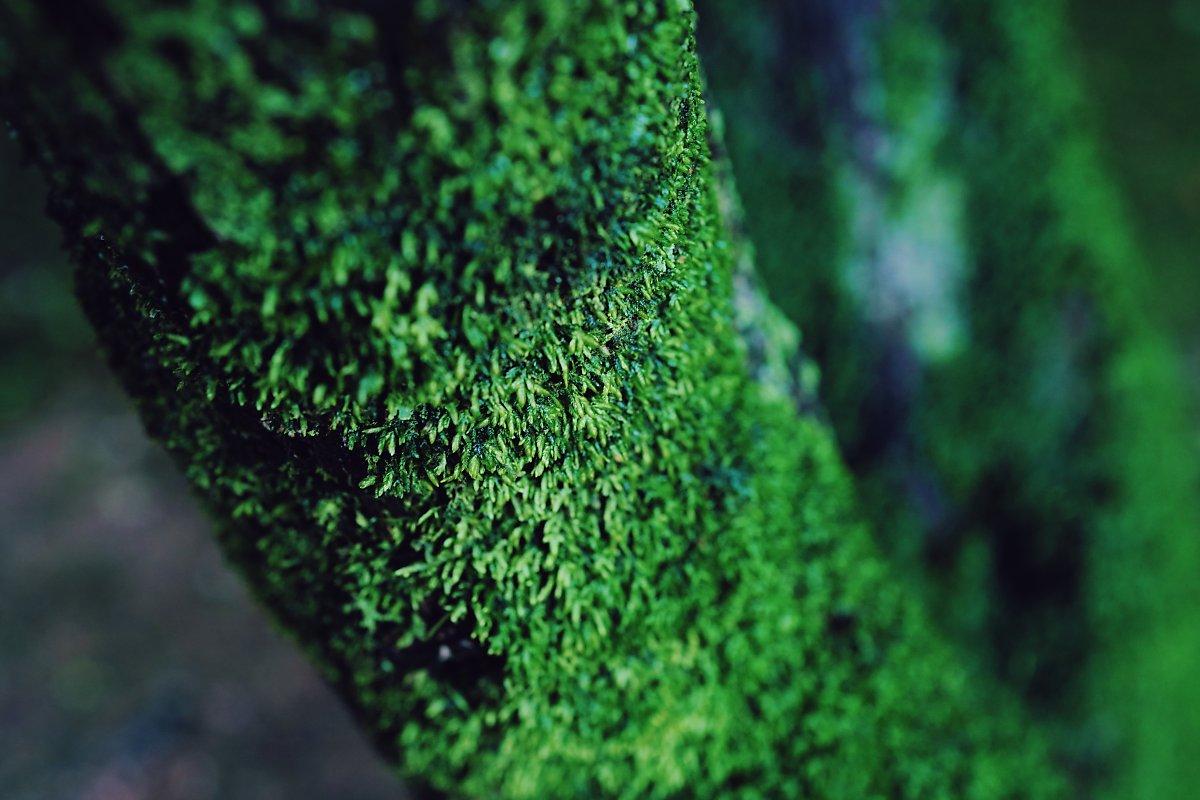 이끼낀 나무 접사