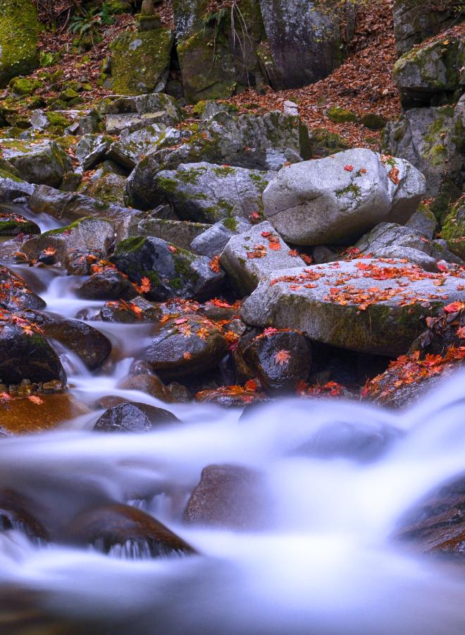빠르게 흐르는 계곡