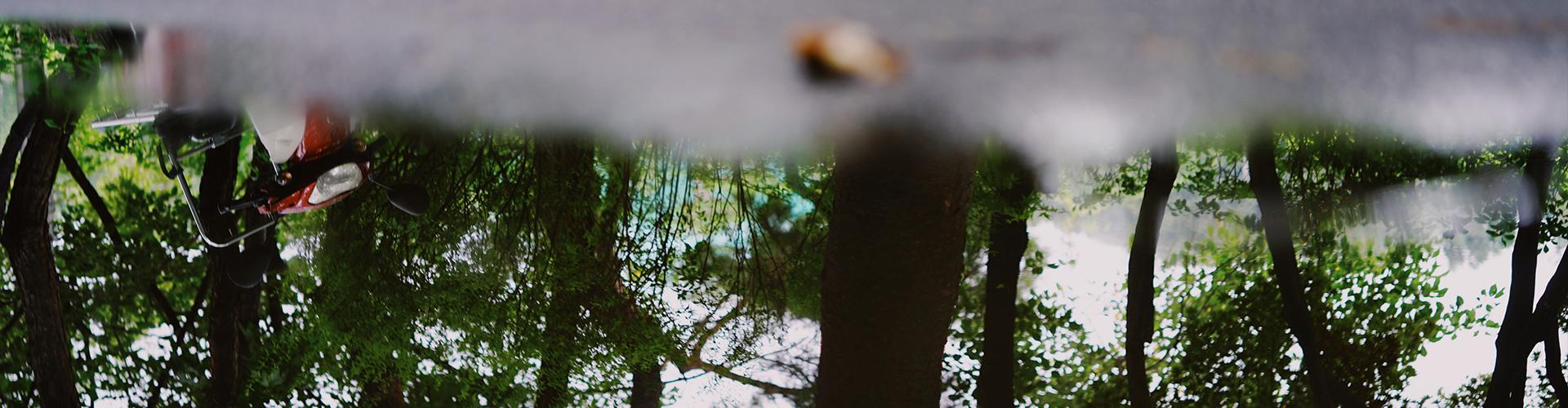 물에 비친 나무