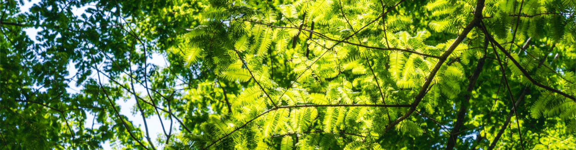 빛을 받는 나뭇잎