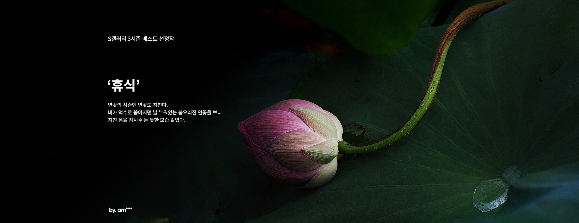 S갤러리 3시즌 베스트 선정작